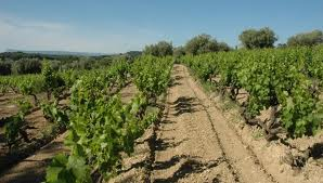 Appellation bandol